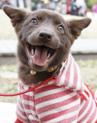 Click image to join our L&SC Volunteer, Adopters and Fosters group!